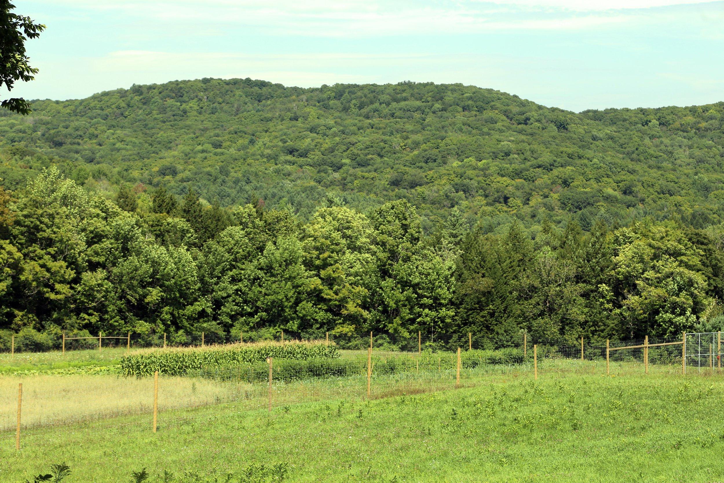 growing fields.jpg