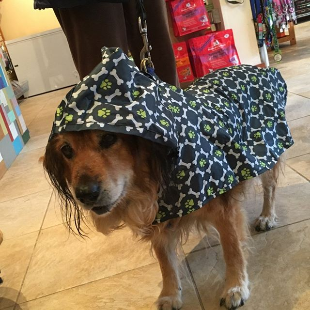 Everything you need when it's raining cats and dogs outside.