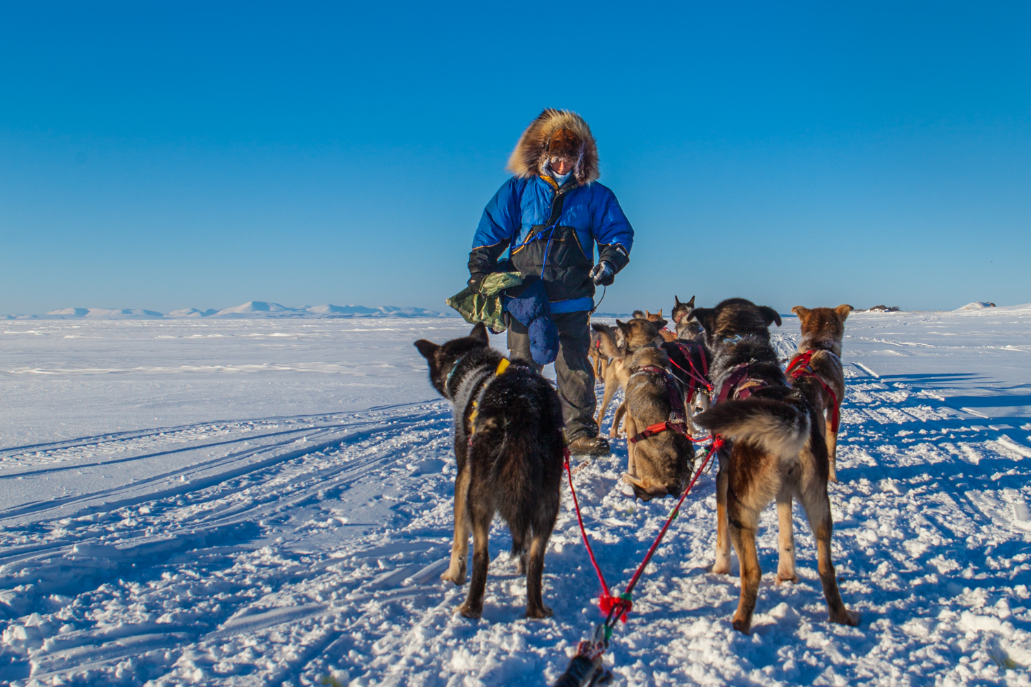 dog team in training on the Chukchi Sea, 2-1.jpg