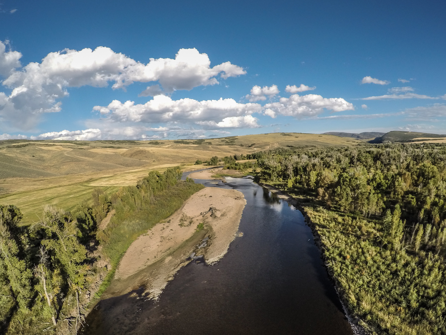 (A Tale of two Yampas: on the left side of this aerial of the Yampa River you can see the effects of allowing cattle to graze all the way down to the river. On the right, you can see the proliferation of species that has resulted from a century of conservation. The differences in vegetation interact in a dynamic manner with the river. )