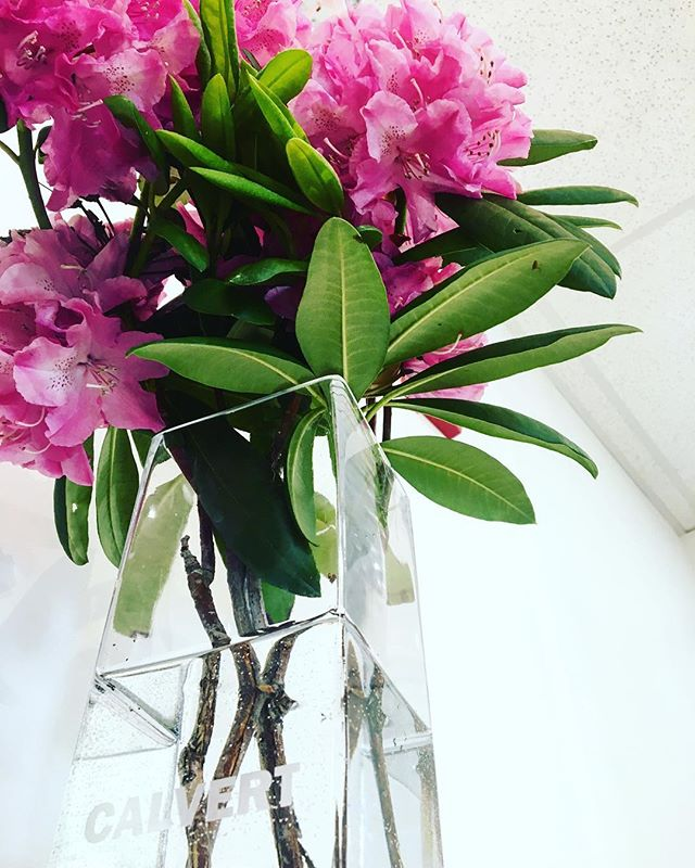 Spring has sprung at the office #flowers #photooftheday #office #interiordesign #nature #green #rhododendron #pink #springtime #bloom