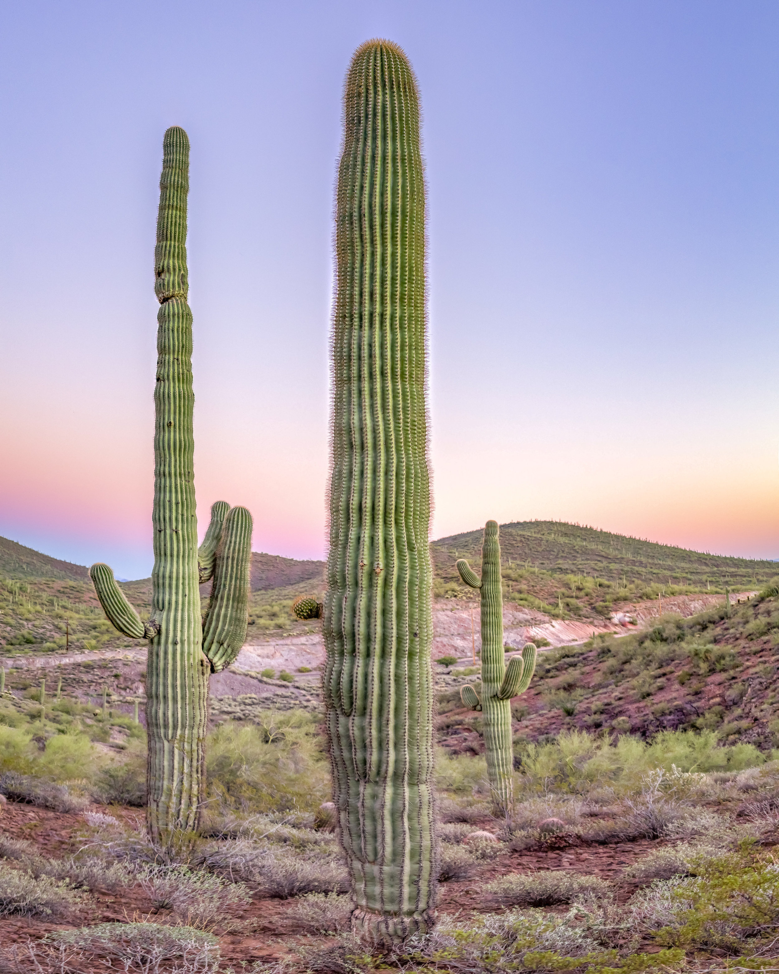 Triple cactus squad in Arizona.JPG