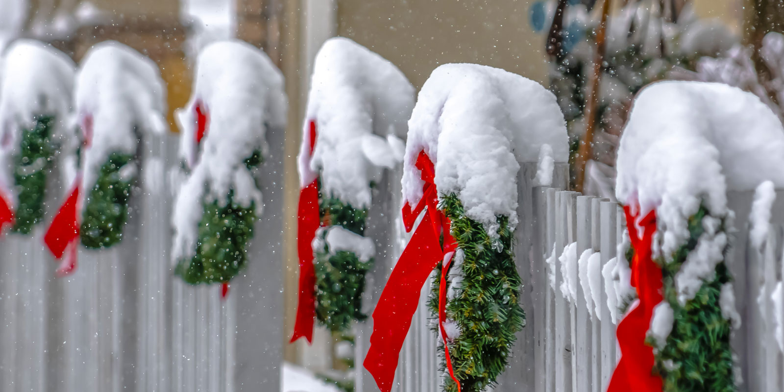 Christmas wreaths on white wooden fence in winter2.jpg