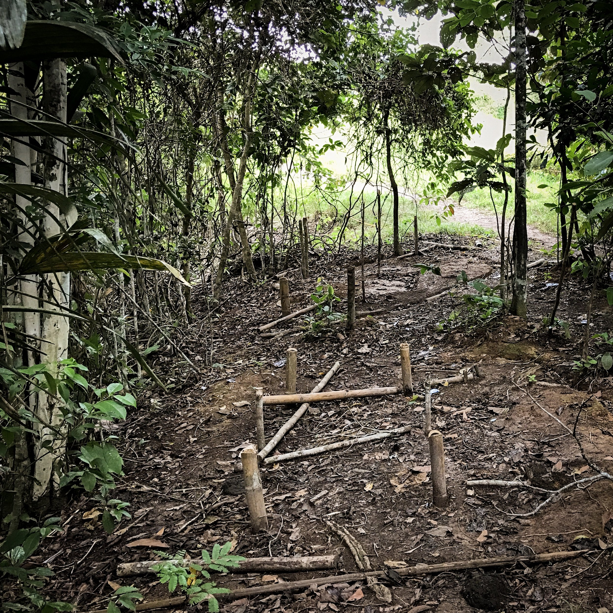 """There is now few traces of the """"caleta"""" in the jungle, these primitive and practical tents where the guerrilleros slept for decades."""