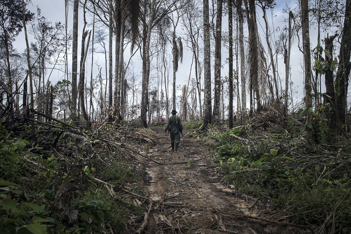 On the way to the camp through part of the rainforest recently burnt by peasants to clear space for a pastureland. This part of Caquetá is still at the front line of the agrarian colonization of the country. (May 10, 2015, South Caquetá)