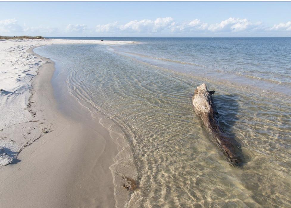 Roost Ocean Spring's Blog