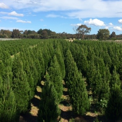 Mooroduc Tree Farm.jpg
