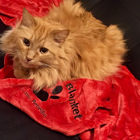 Flynn is loving his new Kona Blanket!