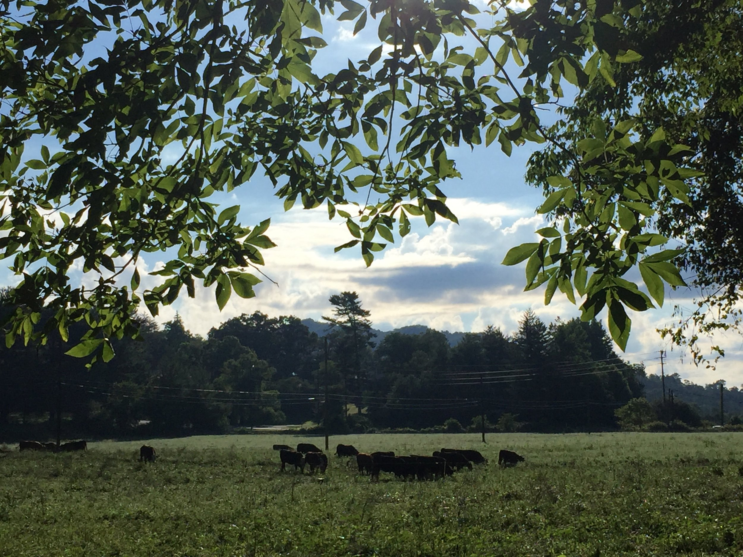 Warren Wilson College Farm