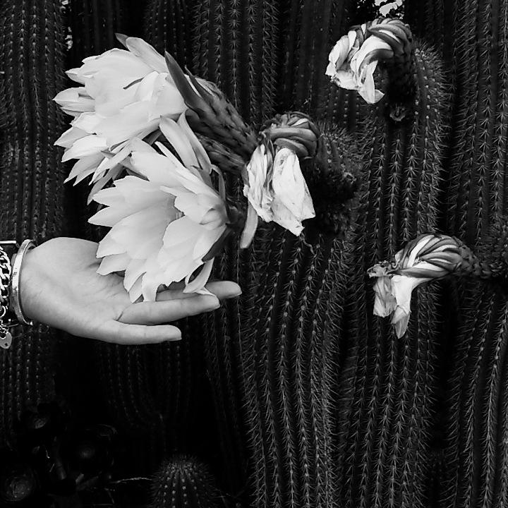 cherykova-botanicals.jpg