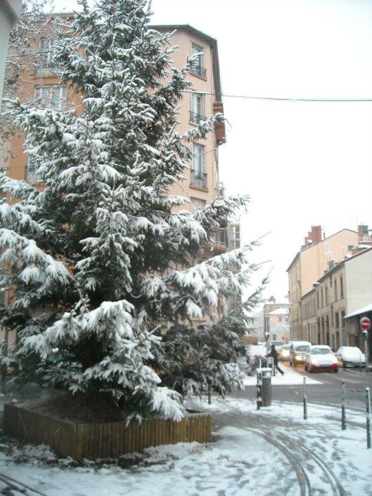 tree-in-snow.jpg