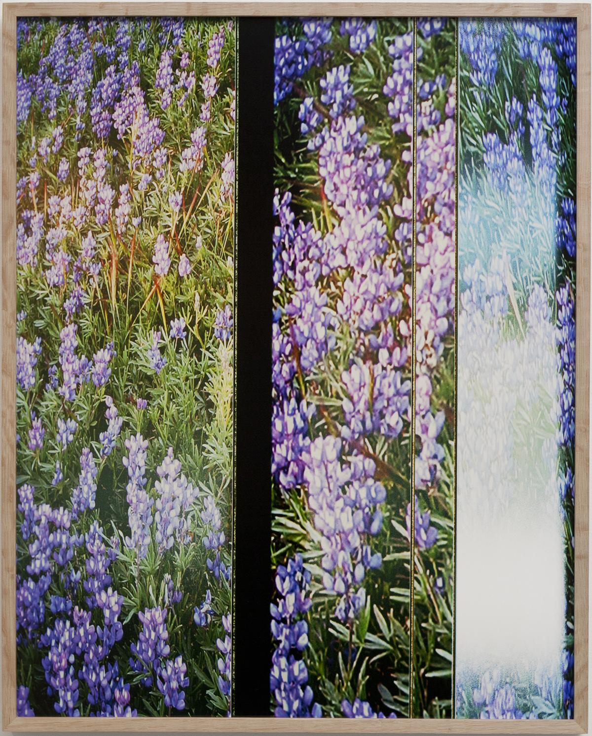 Anthony_Lepore_Wildflowers1.jpg