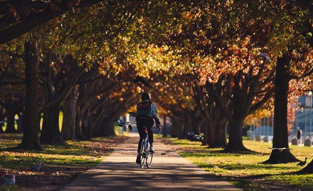 Autumn.  #canberra #sonya7iii #lakeburleygriffin