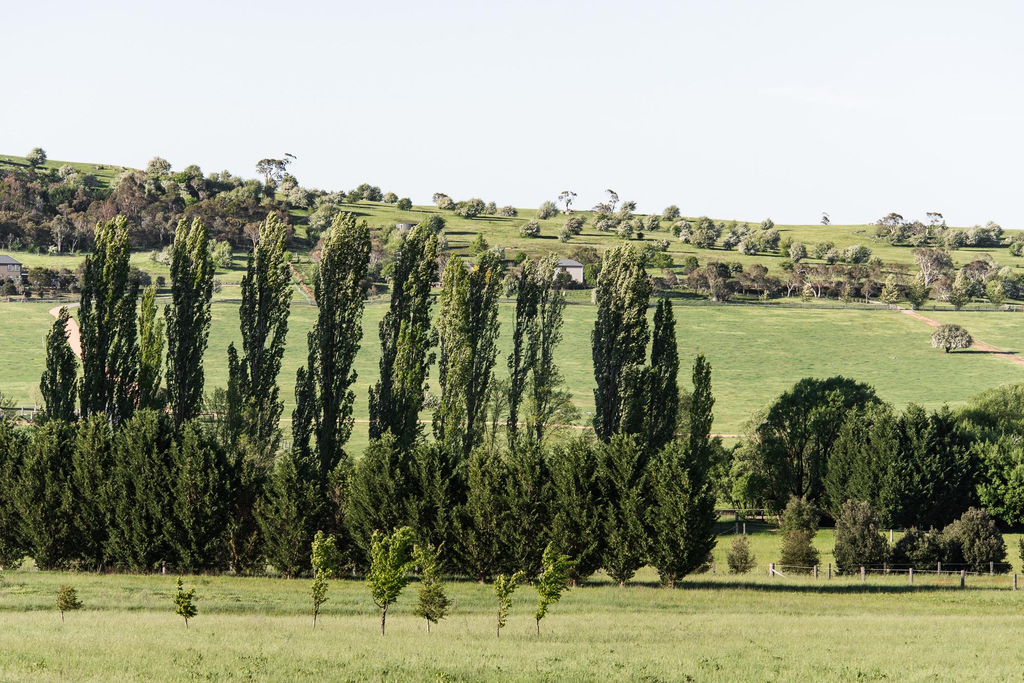 Image: Mona Farm, NSW