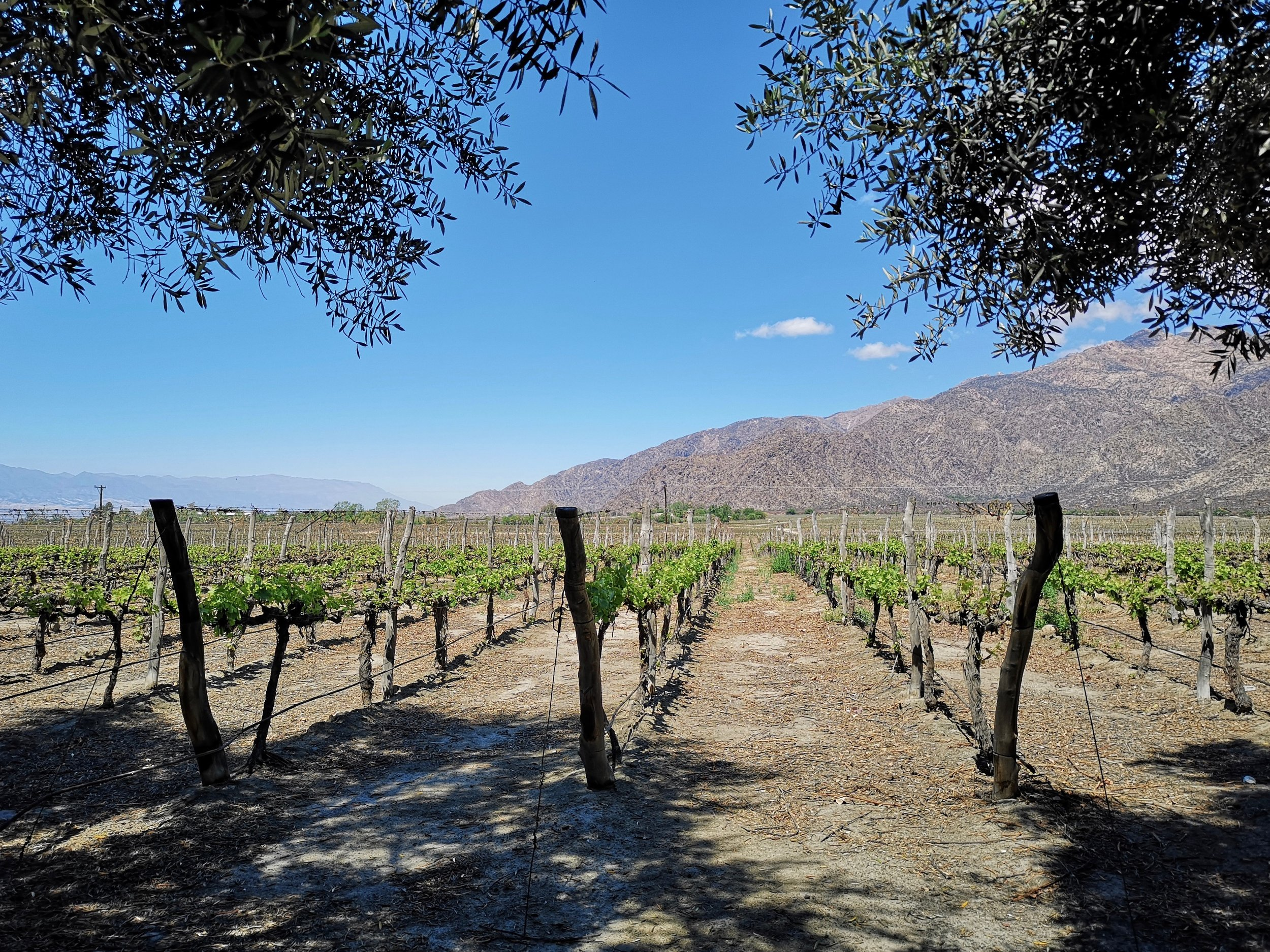 46 Vines at Grace Cafayate   - The Grown Up Edit.jpg