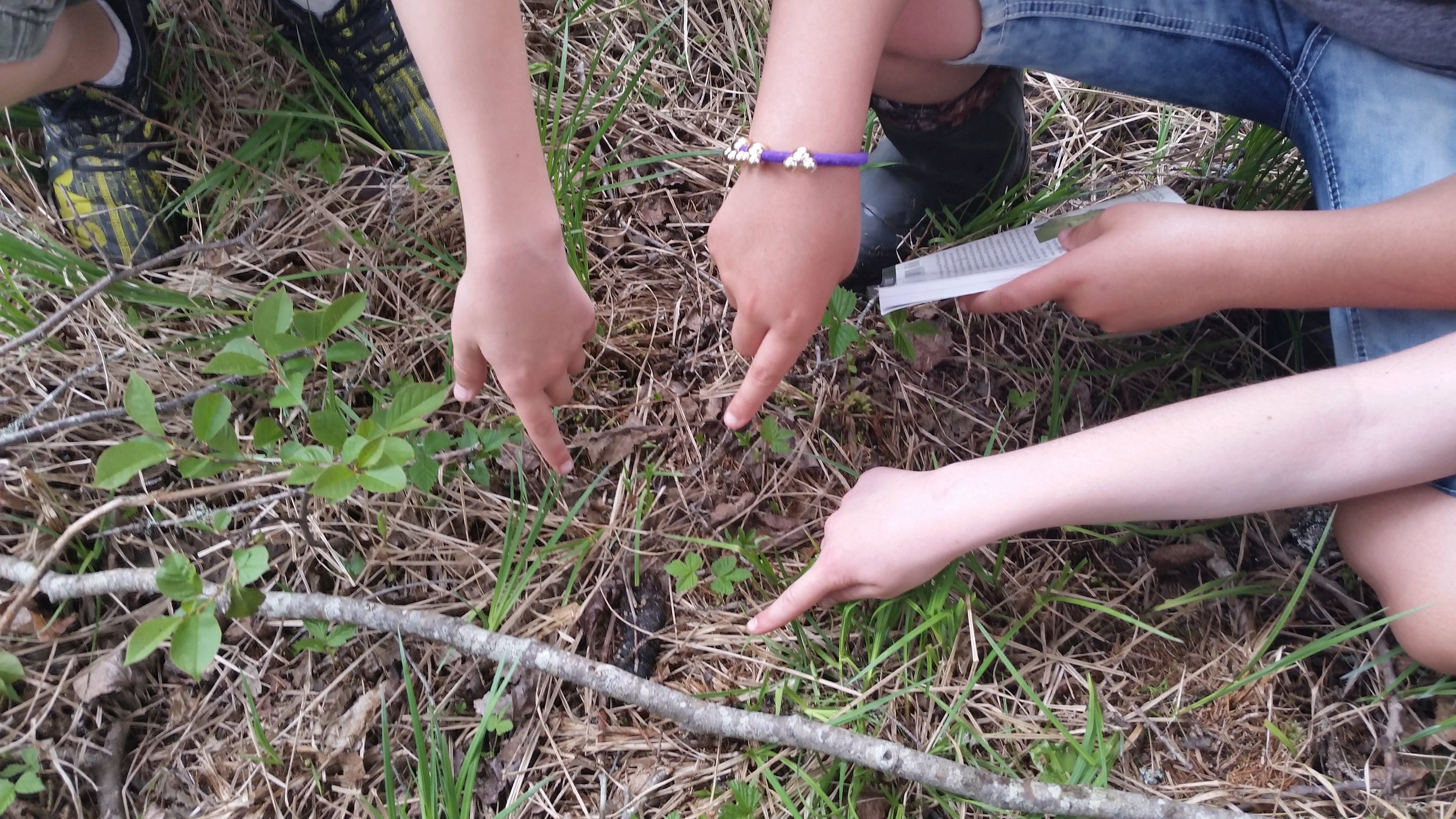 They found some scat (but don't worry, they didn't touch it with their hands)!