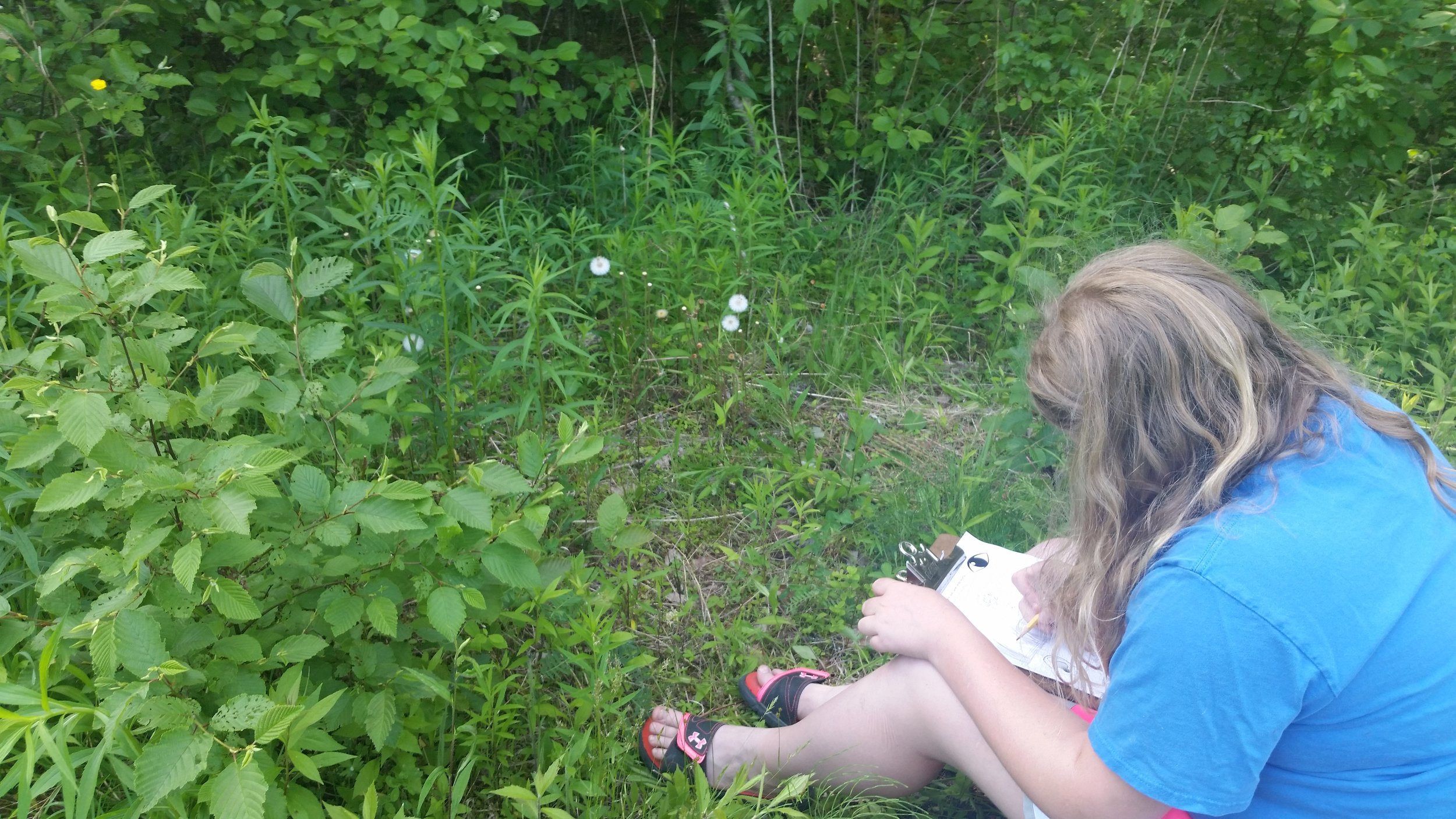 Sketching observations about changes in their schoolyard since March