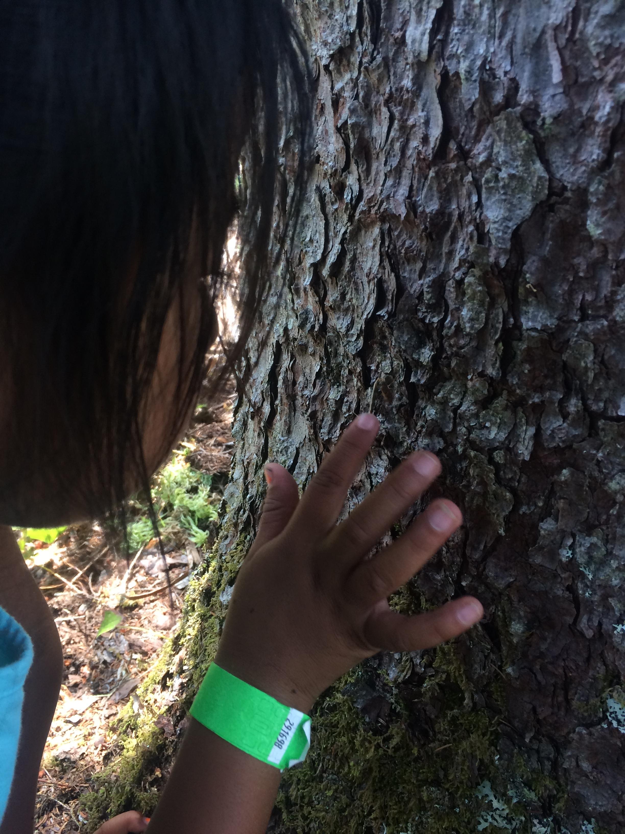 Tree Touching.JPG