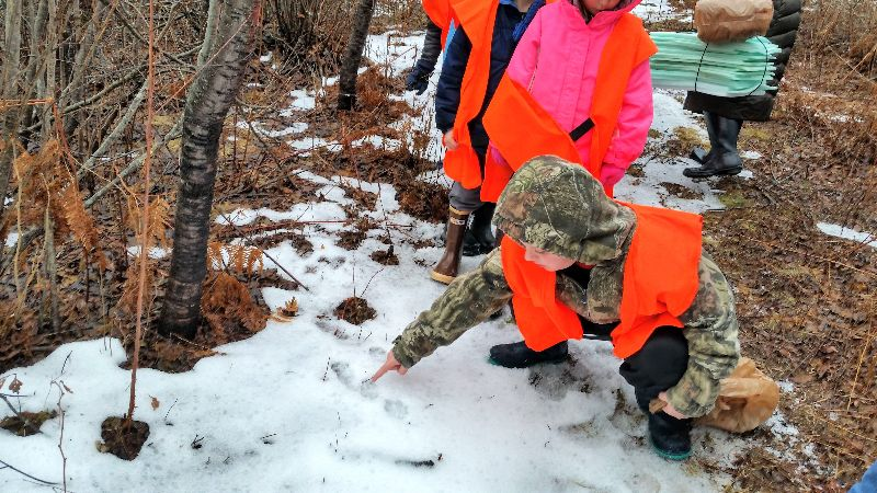 Jonesport student observing a snowshoe hare track
