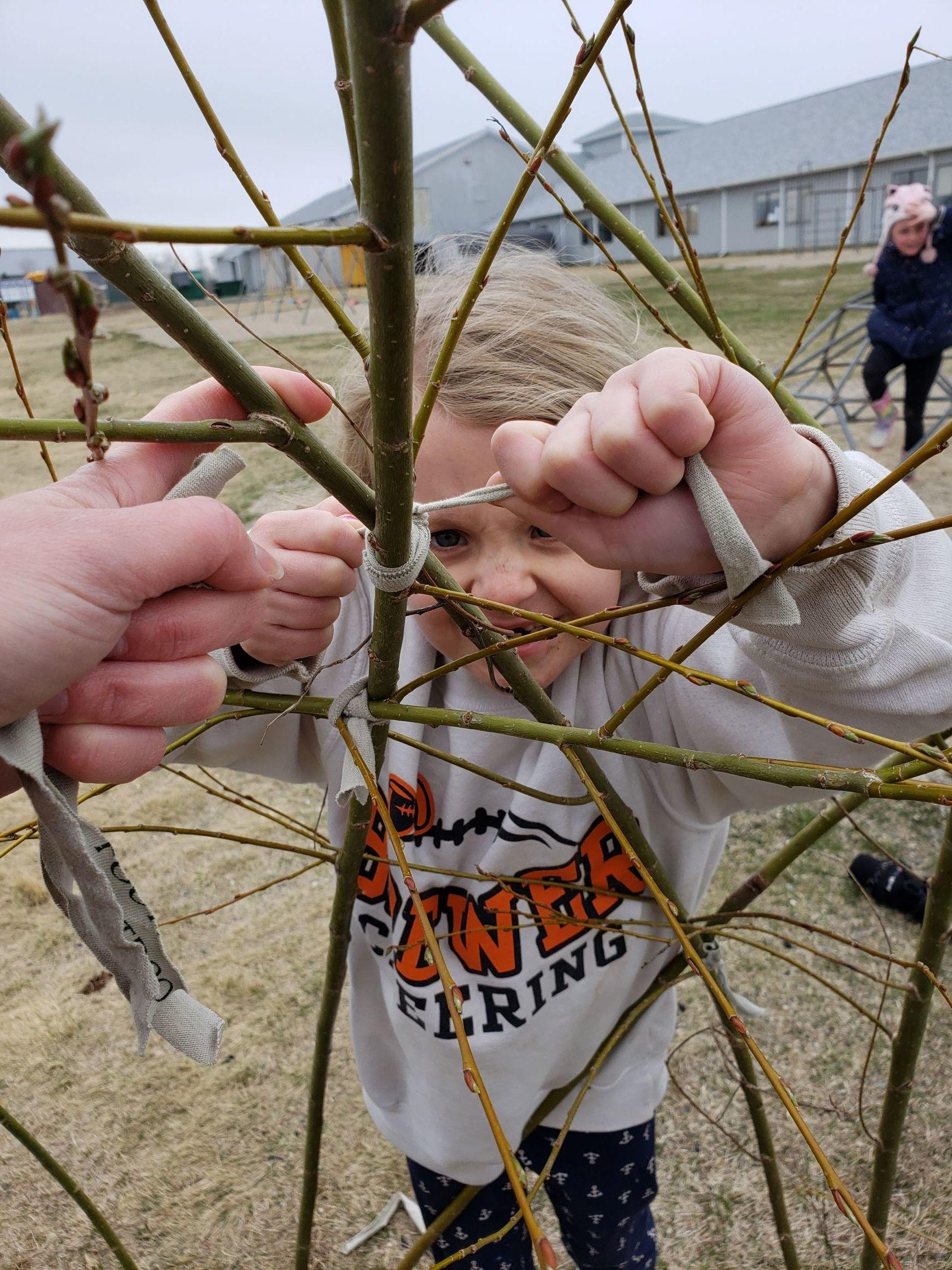 Jonesport Willow Shelter.jpg
