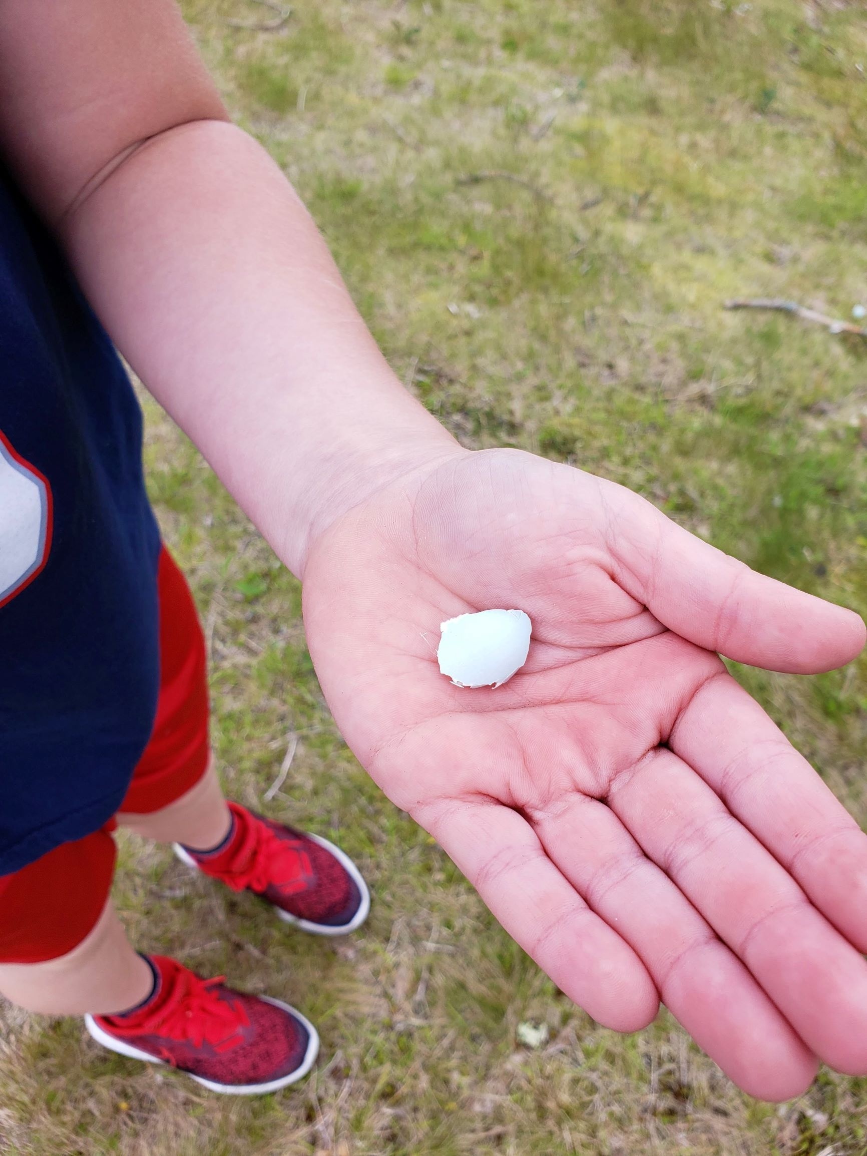 An egg fragment found while identifying as many different living things as possible!