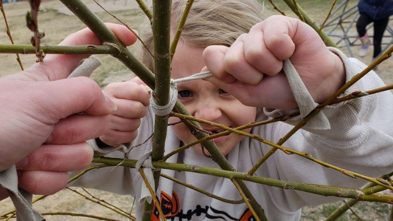 Building a Living Willow Shelter in Jonesport