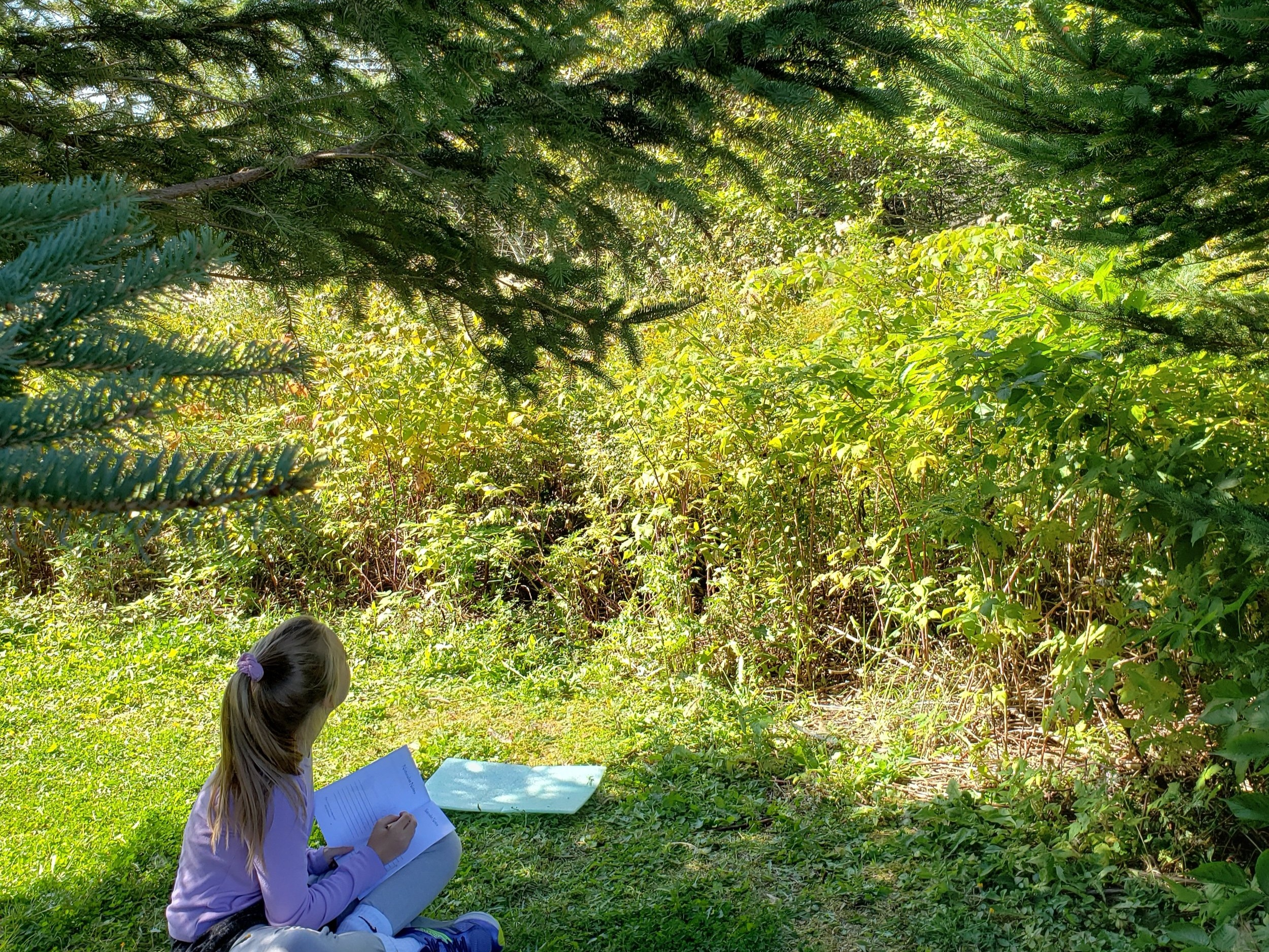 Milbridge 5th-grader drawing and writing about her bird observations