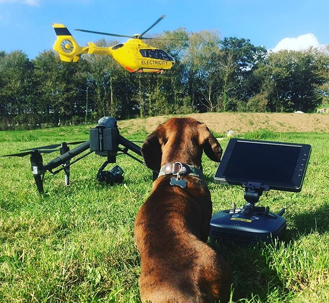 Busy day at the #helipad. My co-pilot was less enthused by the interruptions. . . . . #dronestagram #droneoftheday #inspire2 #helicopter #droneporn #octobersun #outsideoffice #sausagedog #dachshundsofinstagram