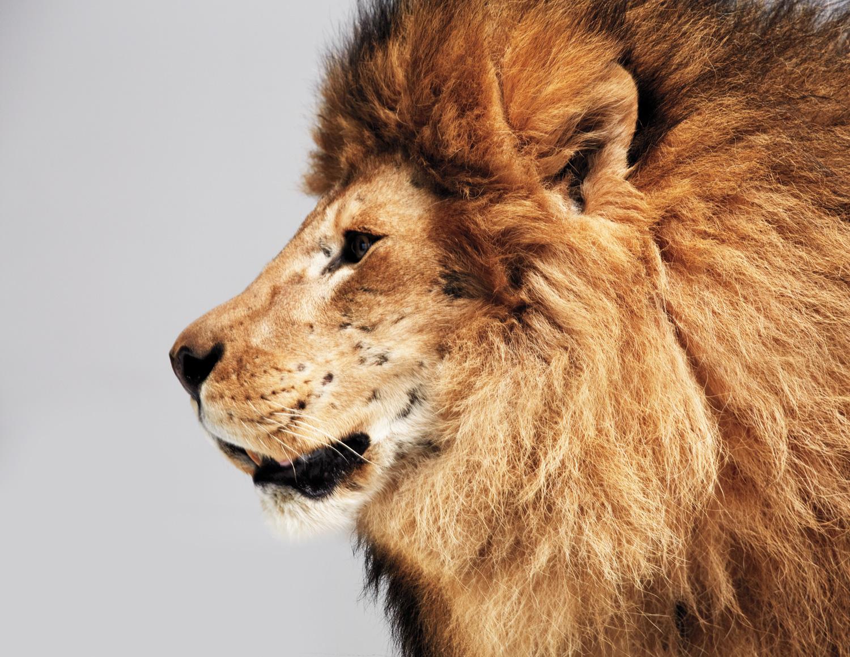 Lion_CMYK.jpg
