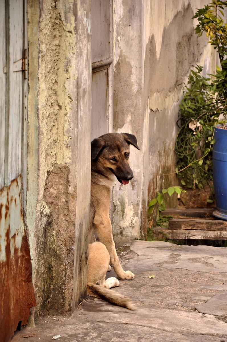 stray-dog1-JAKARTA-INDONESIA.jpg