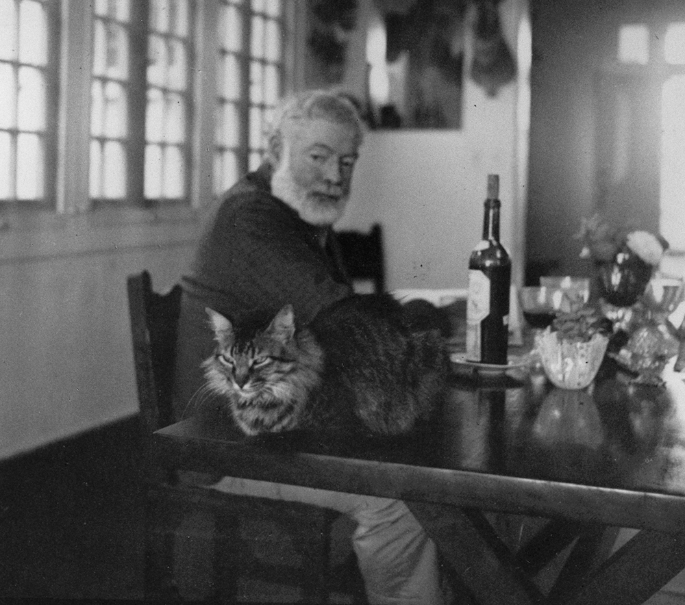""""""" Hemingway looks at this cat Cristobal on a table in Finca Vigia,"""" Year Unknown.Ernest Hemingway Collection, John F. Kennedy Presidential Library and Museum, Boston."""