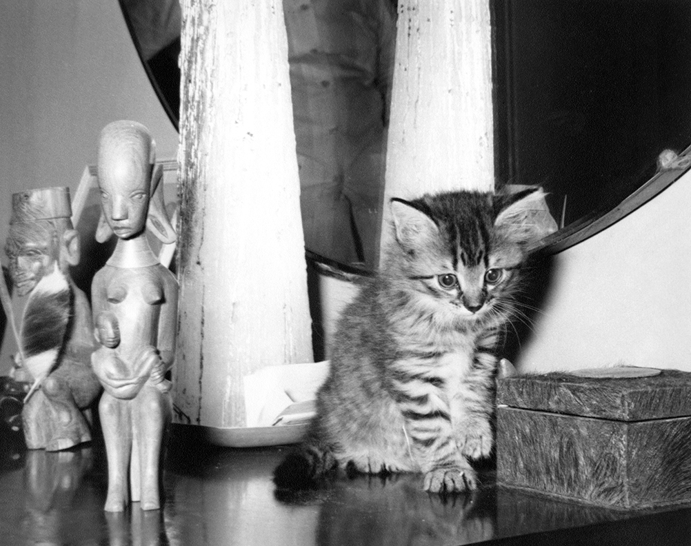 Cristobal, Ernest Hemingway's kitten, sitting next to African statues at Finca Vigia, San Francisco de Paula, Cuba. Year Unknown.Ernest Hemingway Collection, John F. Kennedy Presidential Library and Museum, Boston.
