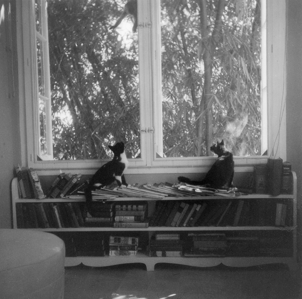 """""""Ernest Hemingway's cats, Friendless' Brother and Willy, watch a monkey outside the window at Finca Vigia in Cuba,"""" Year Unknown.Ernest Hemingway Collection, John F. Kennedy Presidential Library and Museum, Boston."""