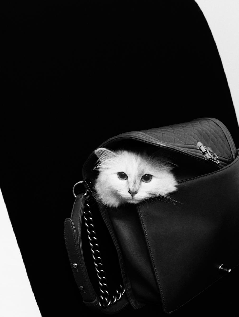 p.86-Choupette_credit-Karl-Lagerfeld.jpg