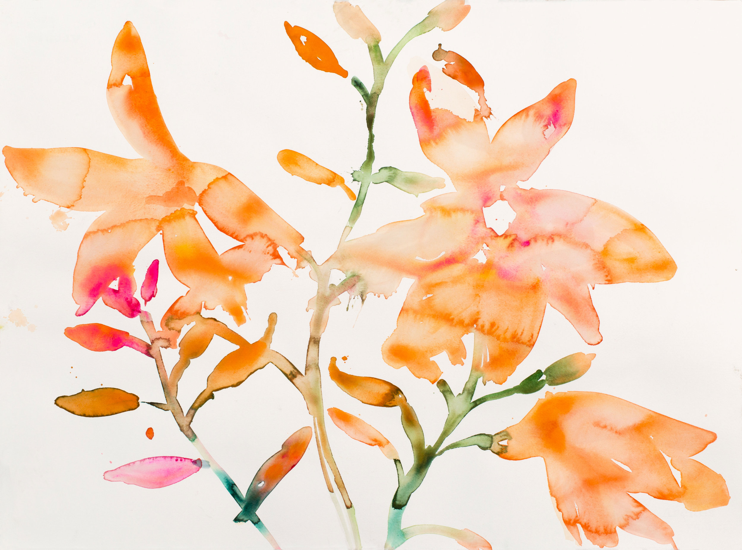 "KIM MCCARTY. ""ORANGE FLOWERS"" (2017). WATERCOLOR ON PAPER. 22 X 30 INCHES. COURTESY OF THE ARTIST AND MORGAN LEHMAN GALLERY, NEW YORK."