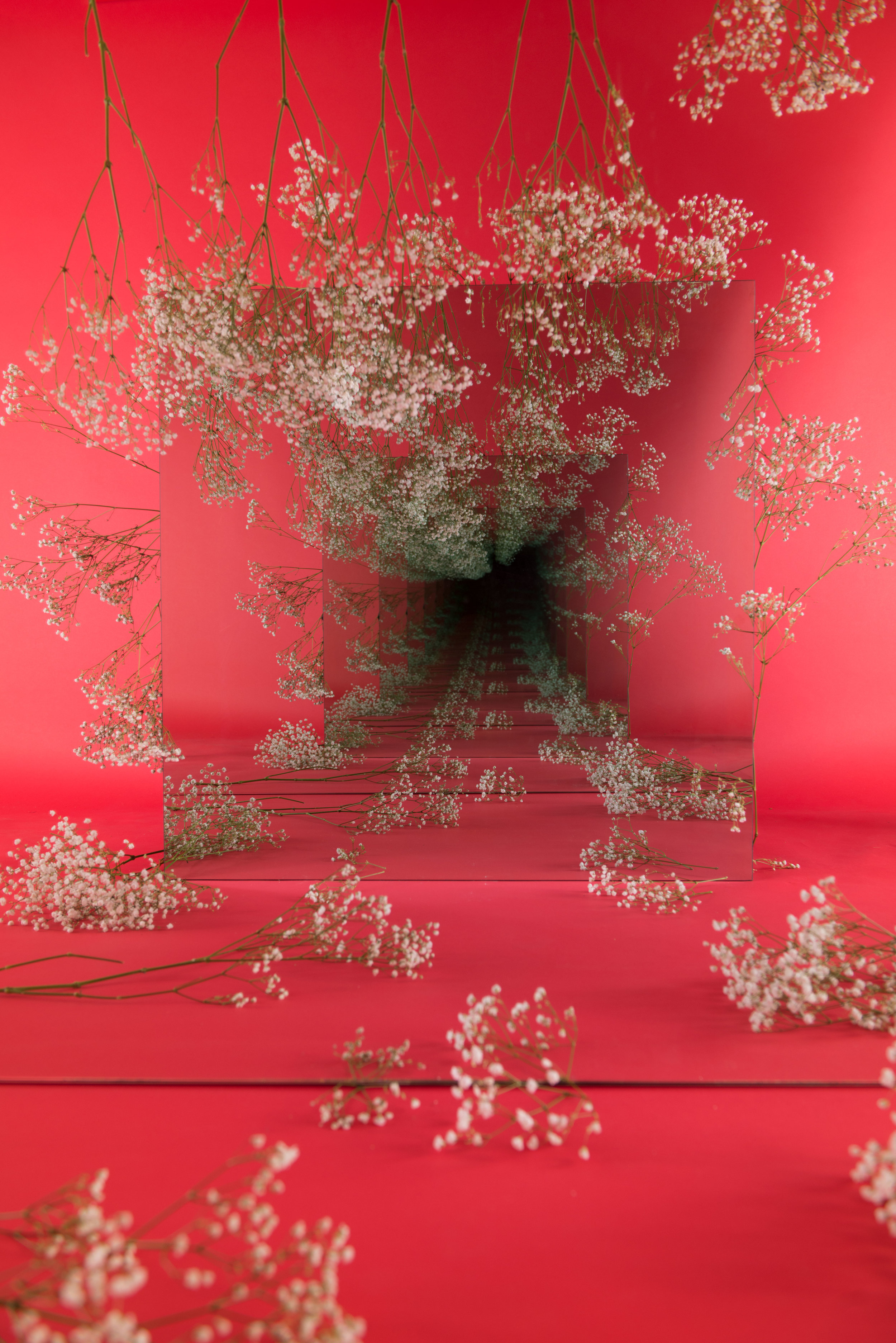 """SARAH MEYOHAS. """"BABY'S BREATH SPECULATION"""" (2018). CHROMOGENIC PRINT. 40 X 60 INCHES. COURTESY OF THE ARTIST."""