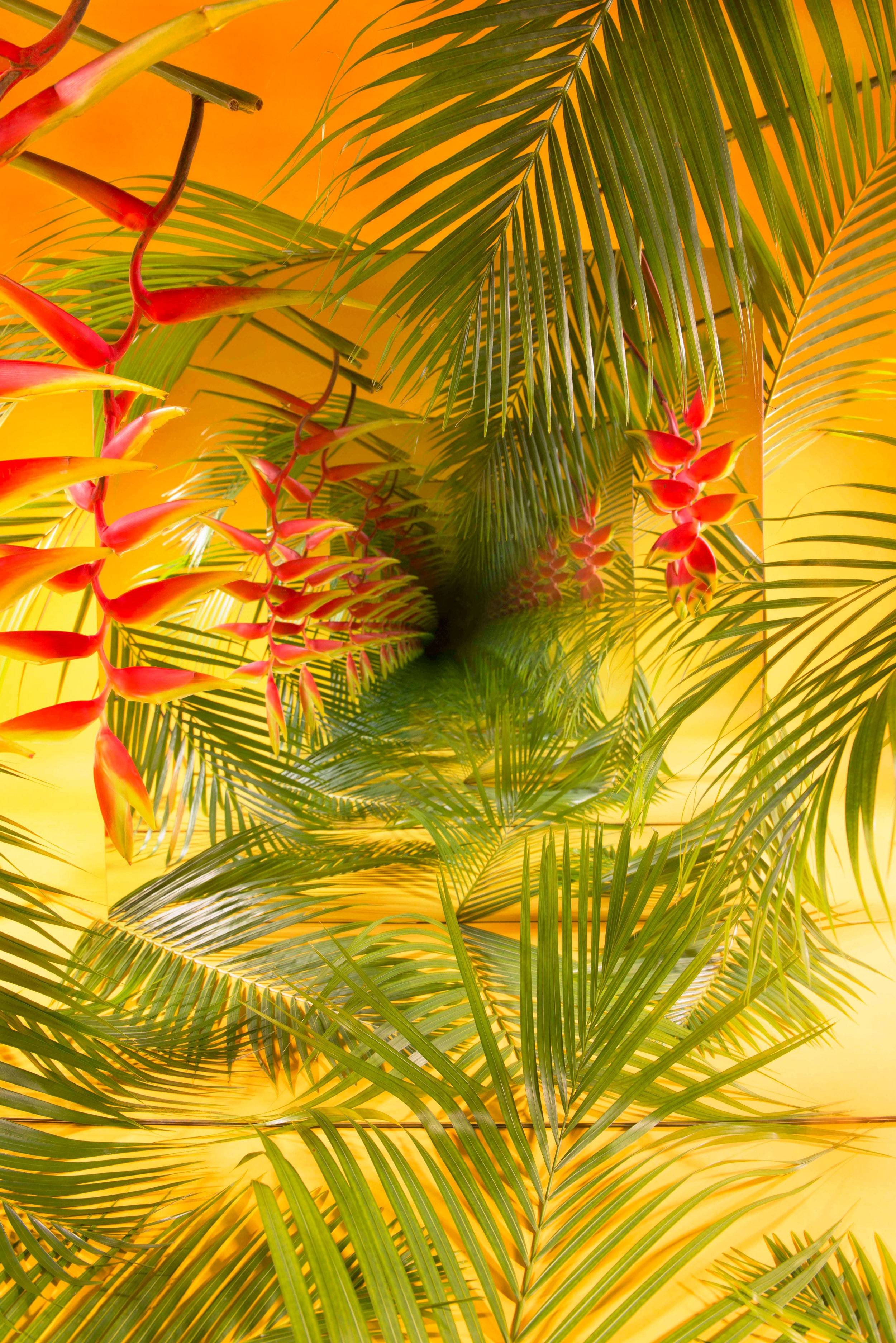 """SARAH MEYOHAS. """"TROPICAL SPECULATION"""" (2018). CHROMOGENIC PRINT. 40 X 60 INCHES. COURTESY OF THE ARTIST."""