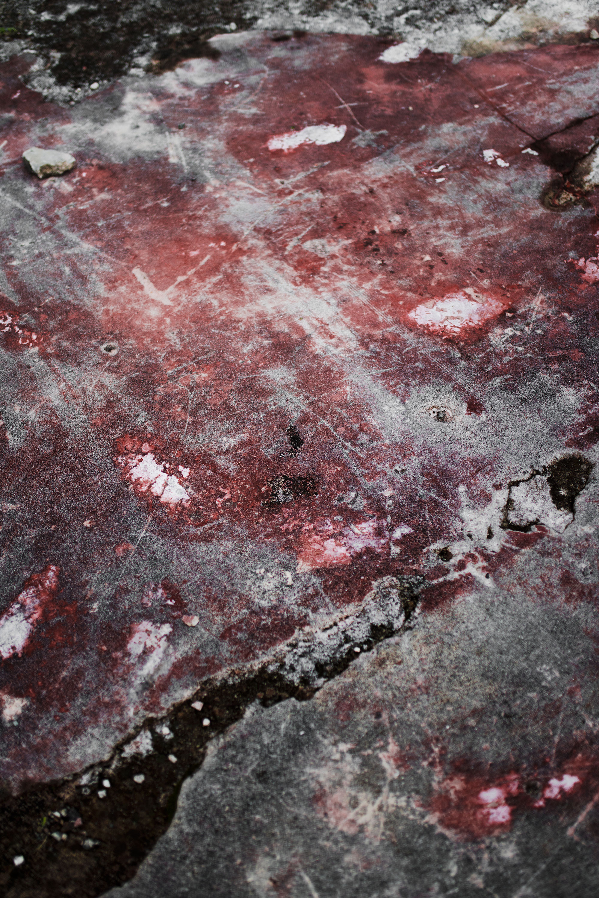 """ELLE PÉREZ. """"STONE BLOOM"""" (2018). ARCHIVAL PIGMENT PRINT. 44 3⁄8 ×  31 INCHES. EDITION OF 5 PLUS II AP. IMAGE COURTESY OF THE ARTIST AND 47 CANAL, NEW YORK."""