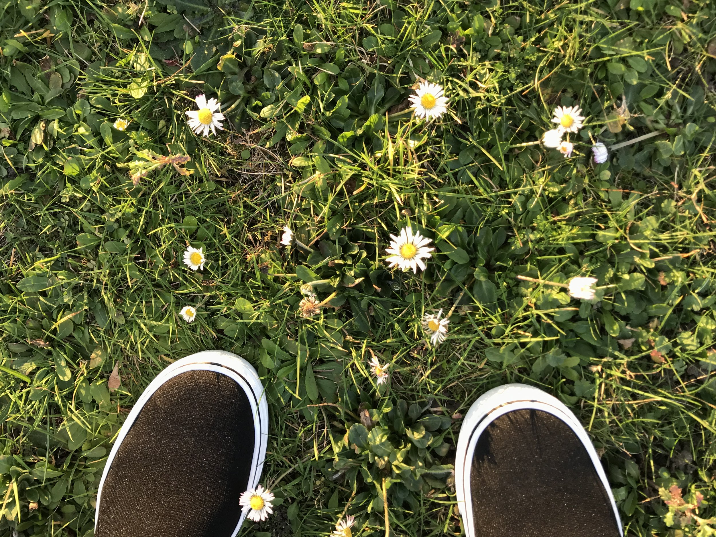 I'm only here for a couple of hours but am making just enough time to jump into nature and smell the roses (or in this case, little daisies). Tbh a friend dragged me out. I prefer eating ramen, listening to Dusty Speingfield, and watching the Golden Girls in private.