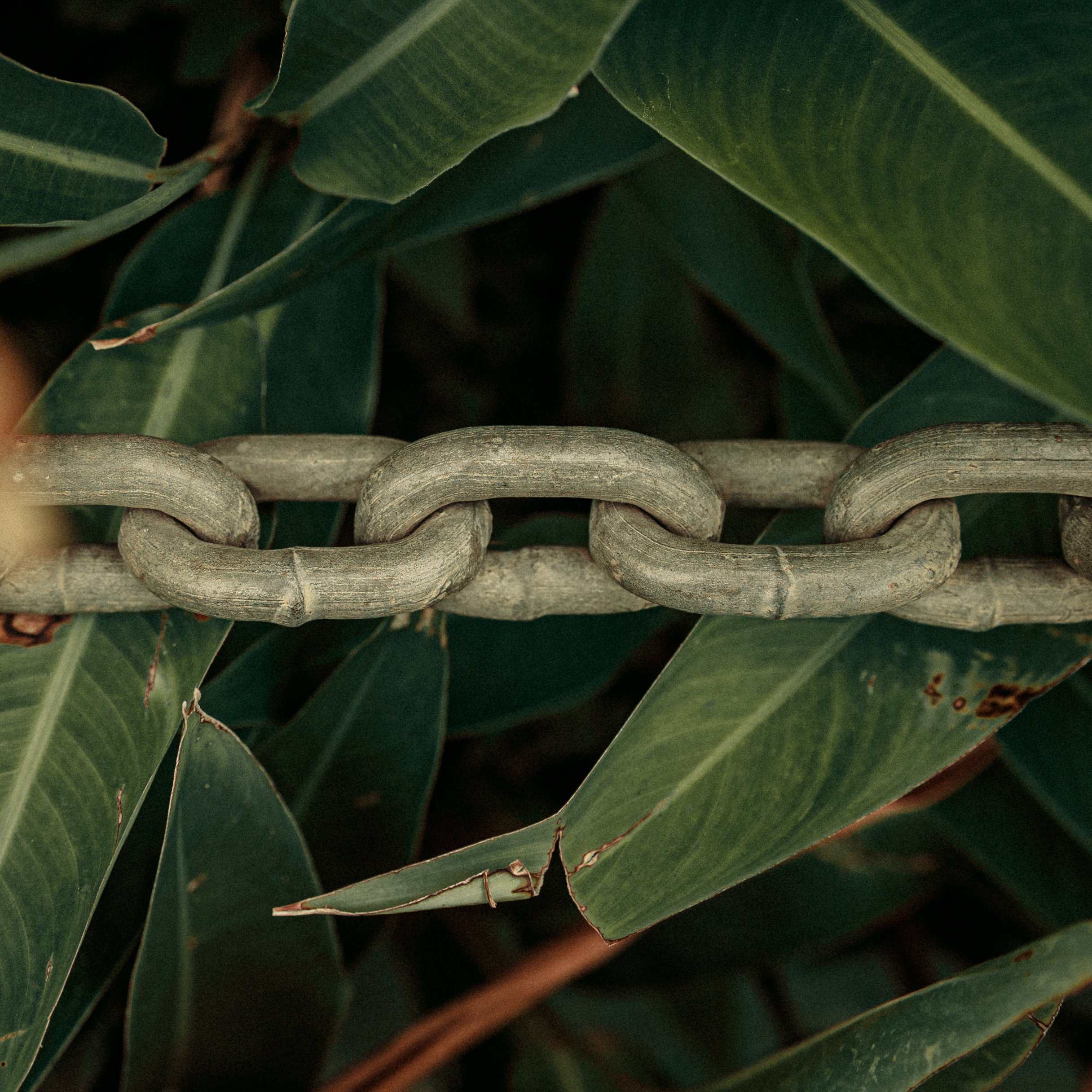 A chain link is a reminder that unity is strength. Also, in Jamaica we call a friend a linky or links. This picture, to me, signifies a man made link in the natural world.