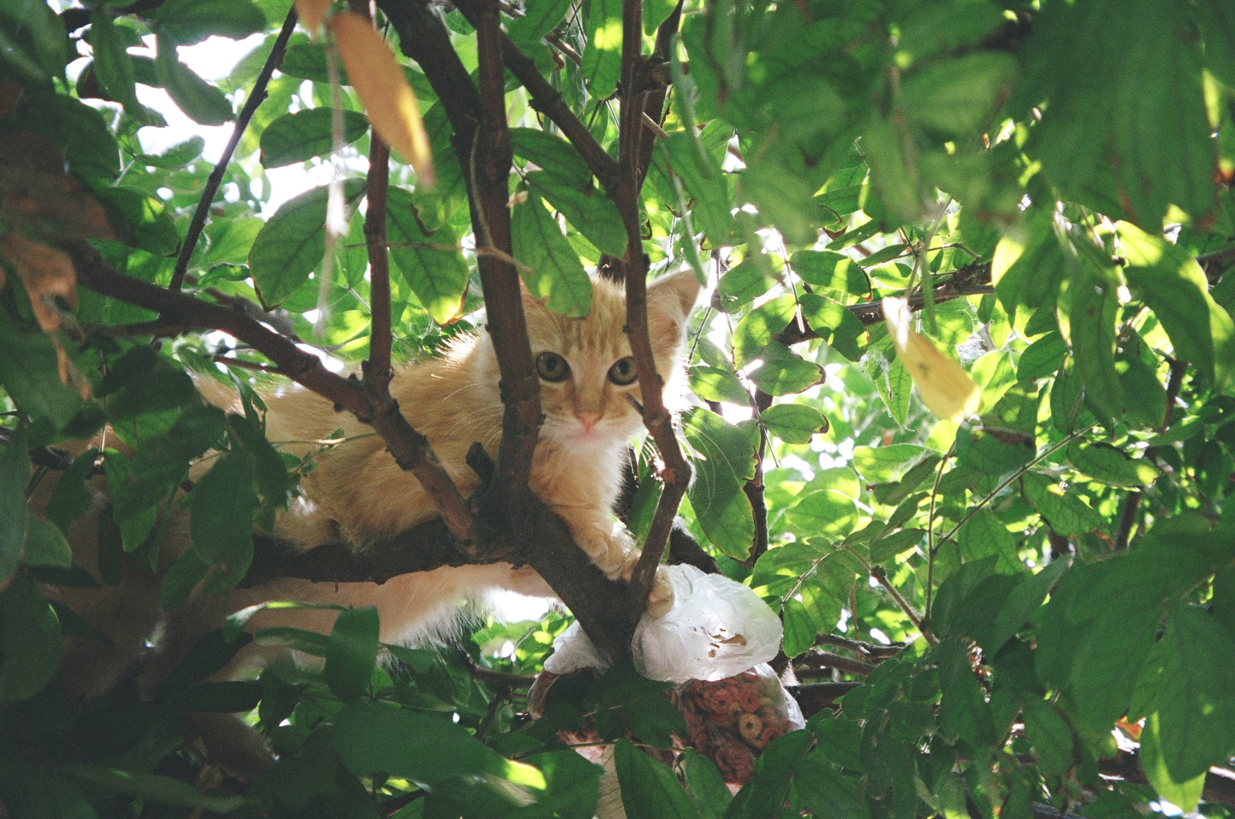 In Hollenbeck Park there are two wild kittens who live in the bushes. I talk to them sometimes and call them my babies. One day they may let me pet them, maybe not.
