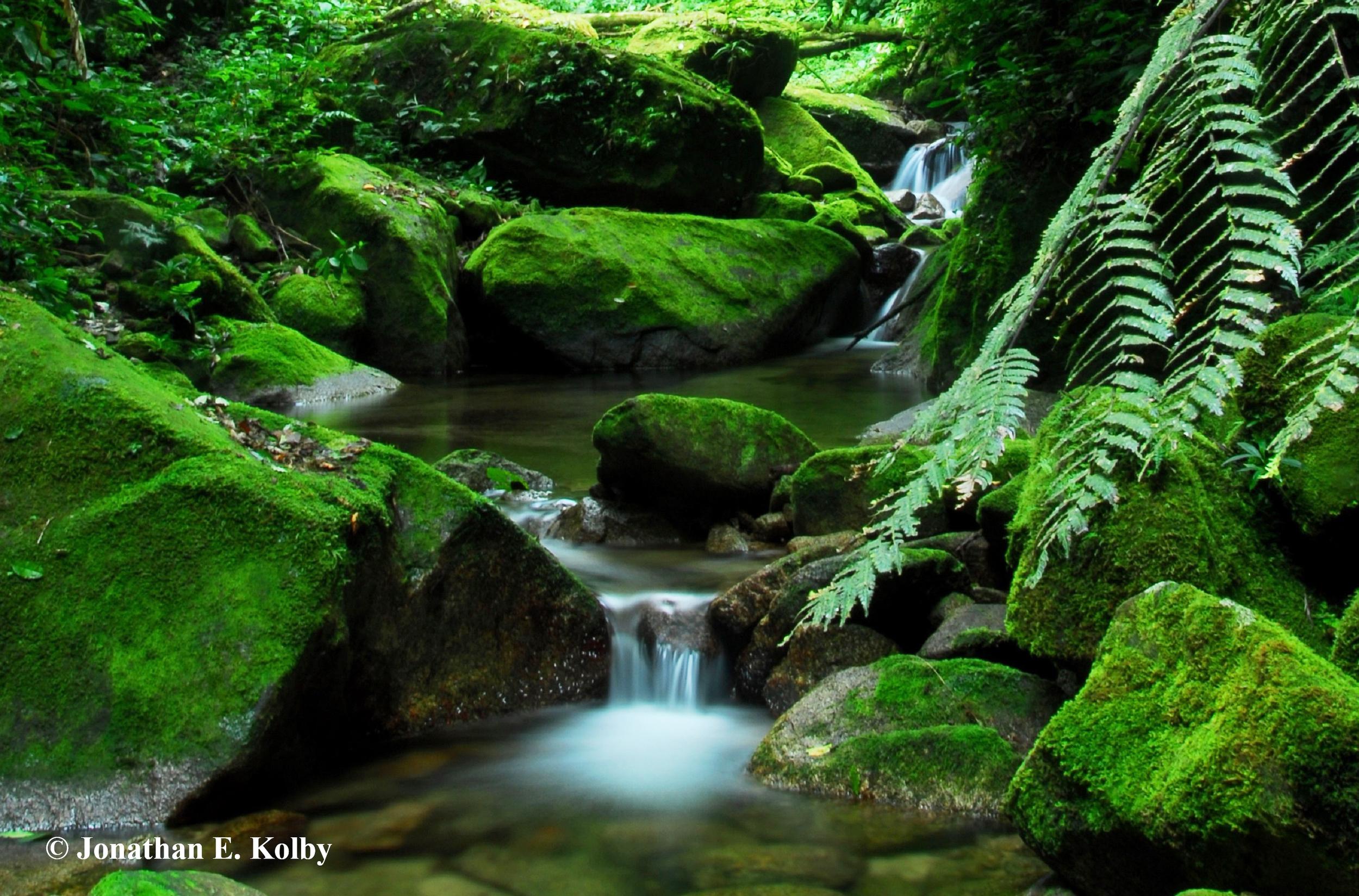 HN Cusuco Rainforest 5_edited more straightened cropped  cr.jpg