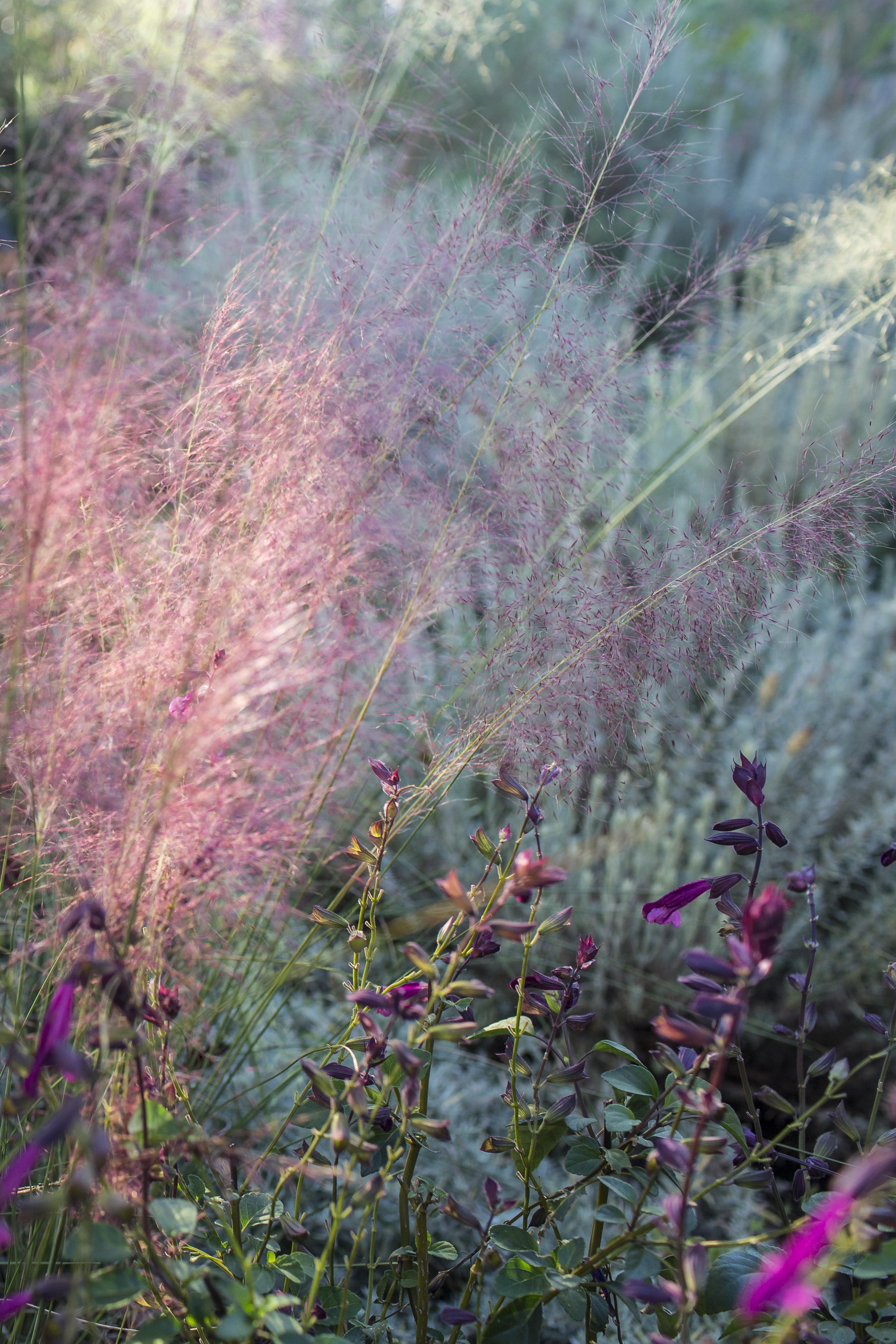 alohabacklitgrass.jpeg
