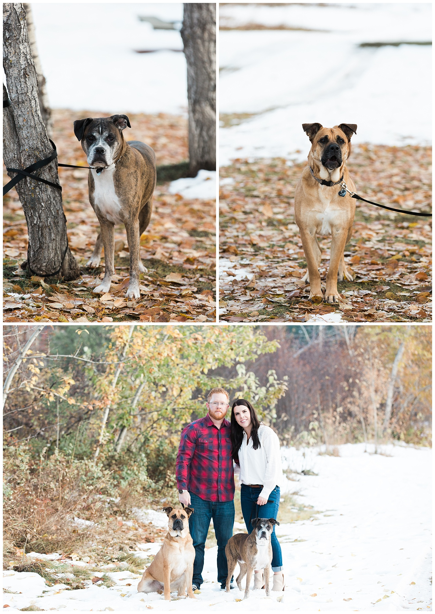 Calgary-fall-engagement-photographer-yyc-1.jpg