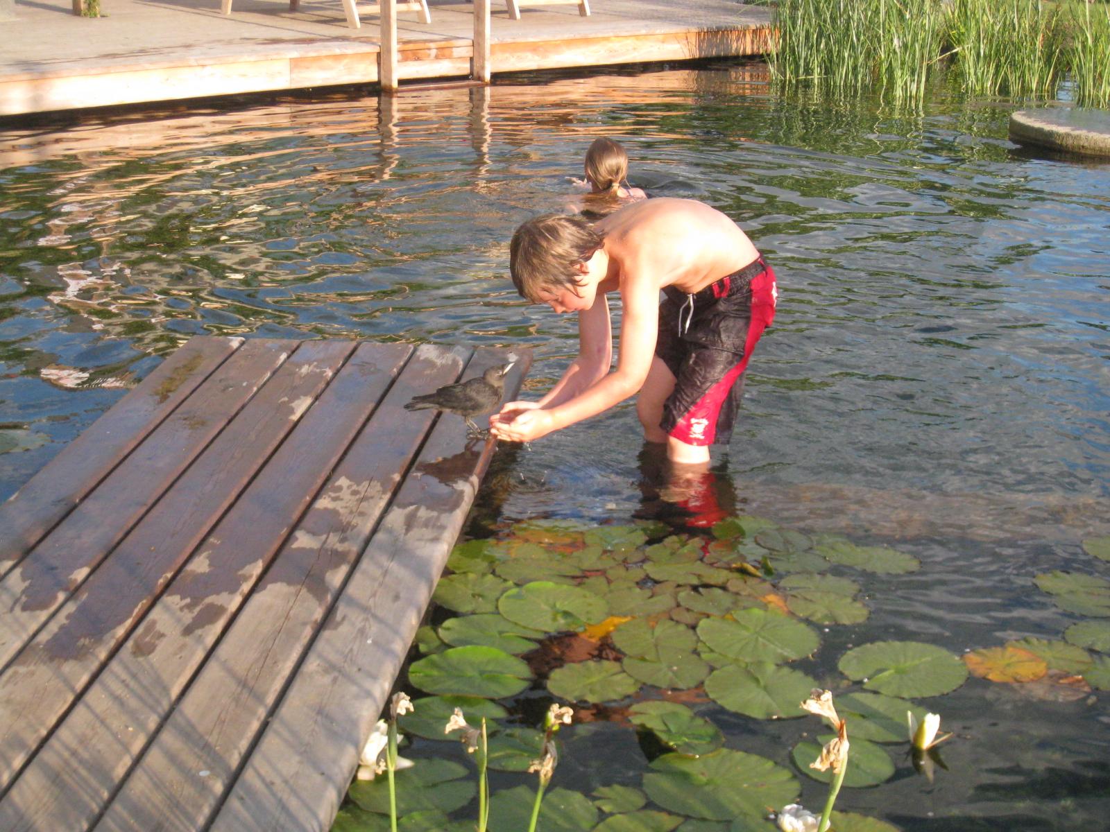 Children with pet Jackdaw Ellicar Natural Pool