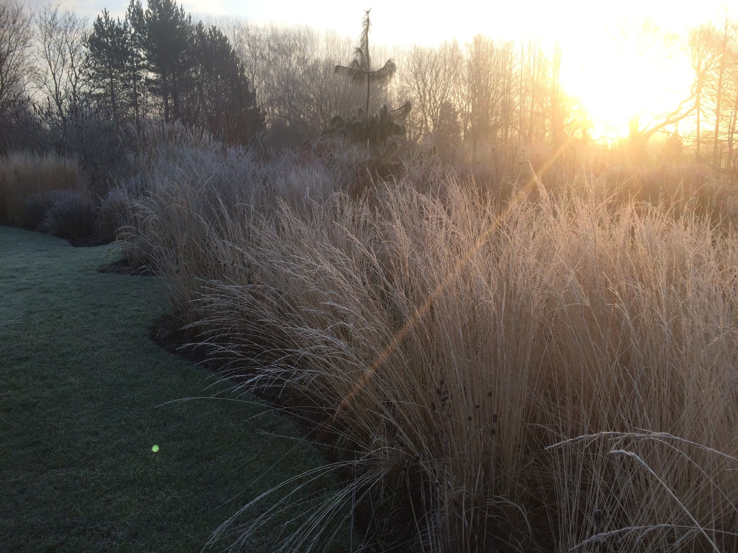 grasses and perennials behind our Natural Pool enhanced with frost and morning sun