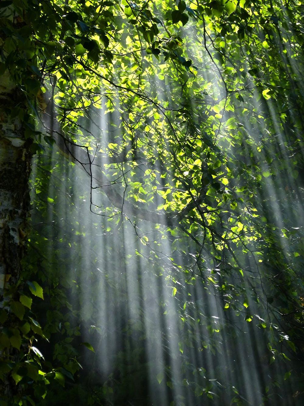 forest-sunbeams-trees-sunlight-70365.jpg
