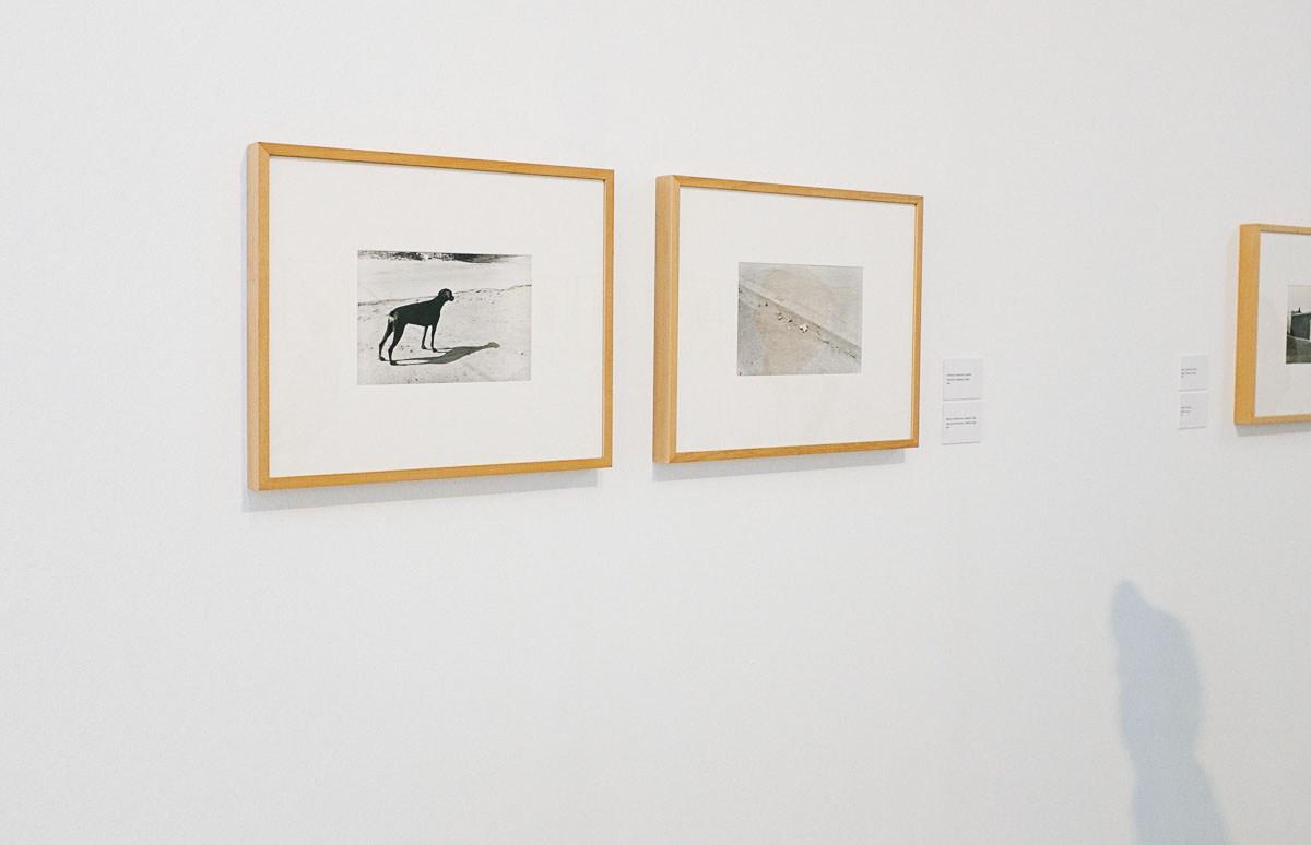 Fotografías de la exposición 'La hora inmóvil, una metafísica del Mediterráneo' de Bernard Plossu en el Jardín Botánico de Madrid. © Ana Zaragoza