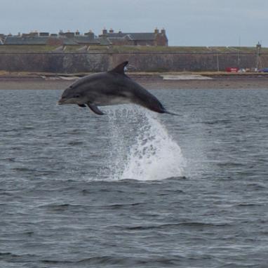 paul jenny wilson dolphin.png