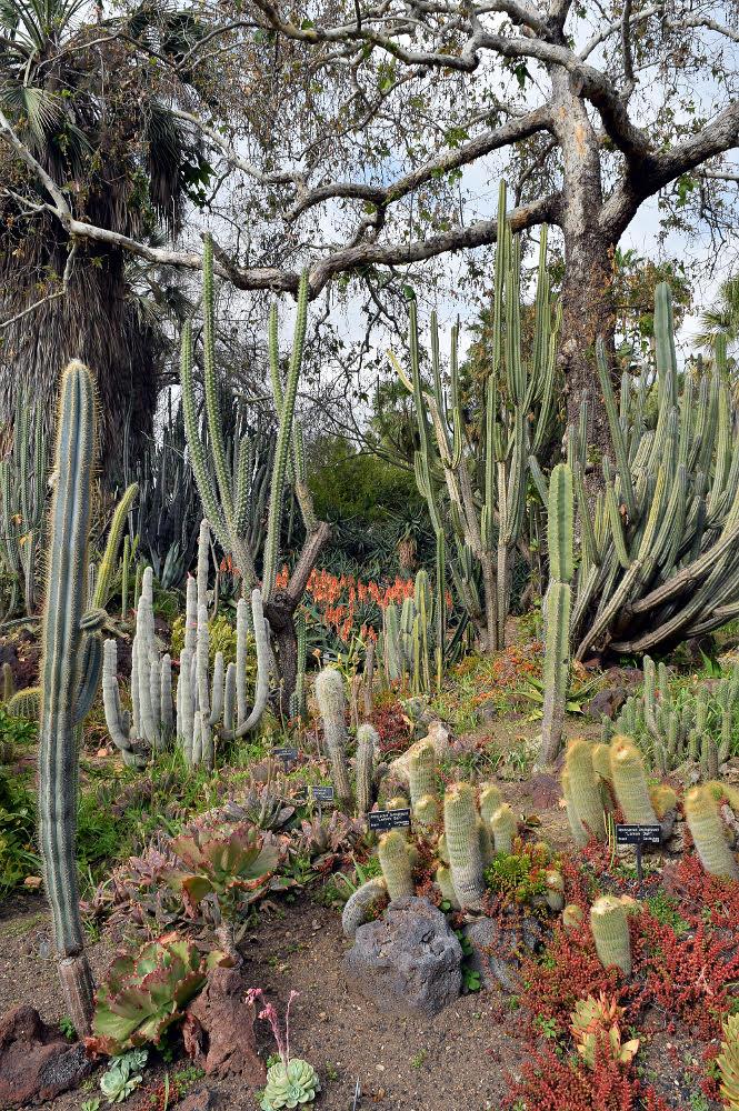 "Display of Cacti, Huntington Desert Garden, San Marino CA, 2017 Color inkjet print, 19.5"" x 13.5"""